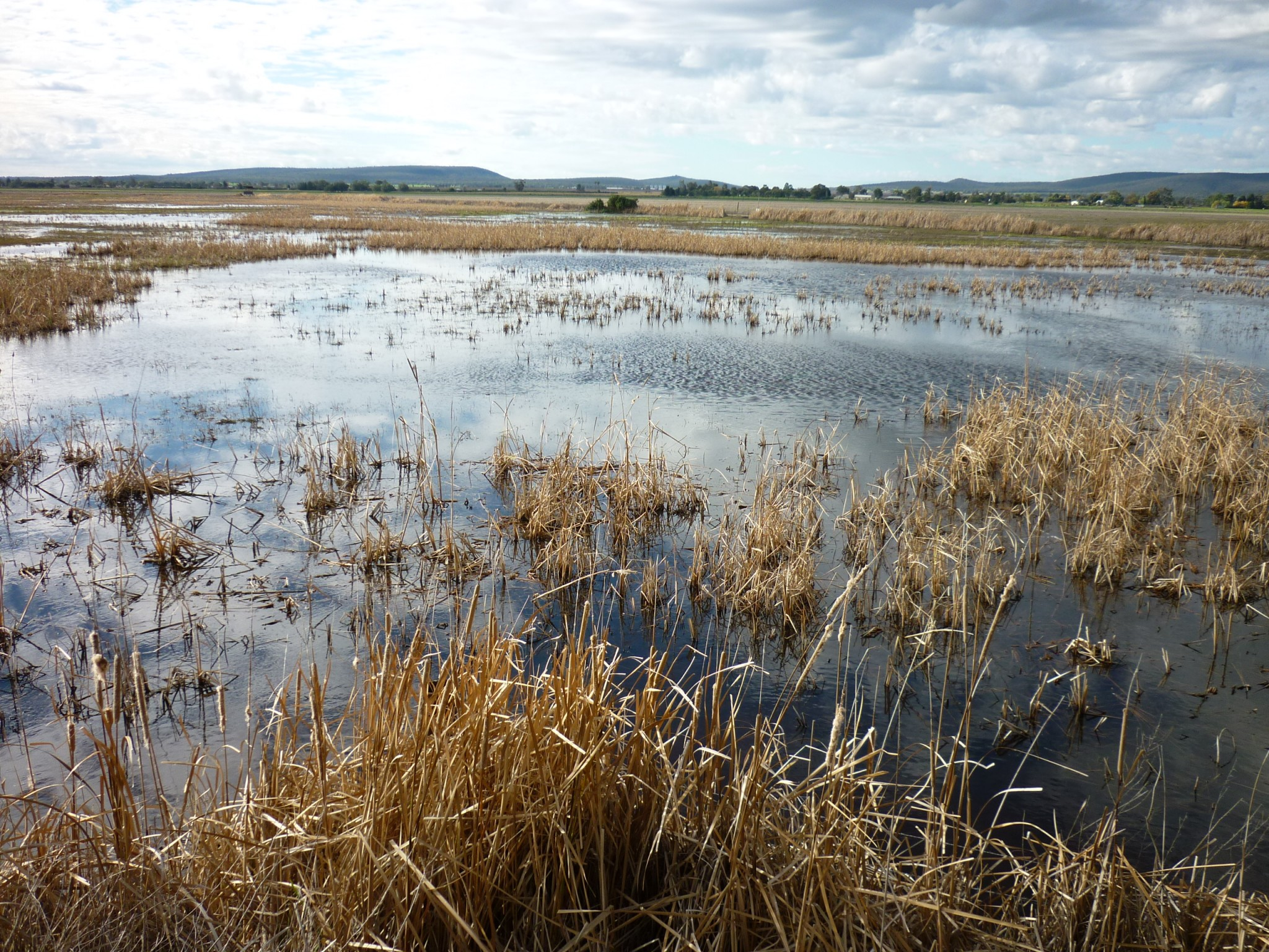 Fivebough & Tuckerbil Wetlands